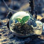 Living Sustainably as a Christian